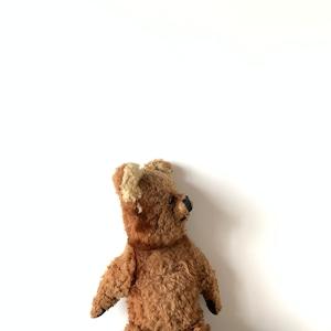 Teddy Bear[C]