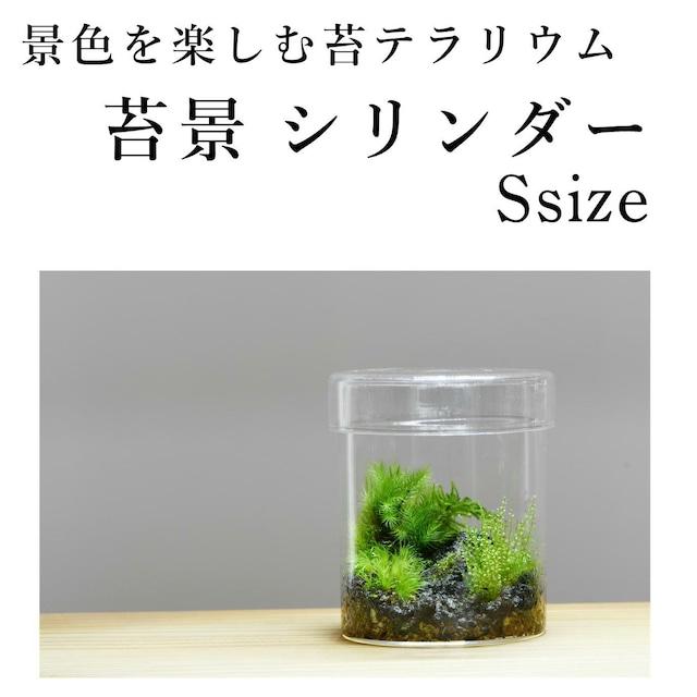 【景色を楽しむ苔テラリウム】苔景シリンダー Ssize