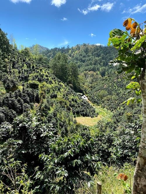 ニカラグア ペラルタコーヒー サンタマリア農園 100g
