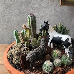 Pinto horse & Black sheep