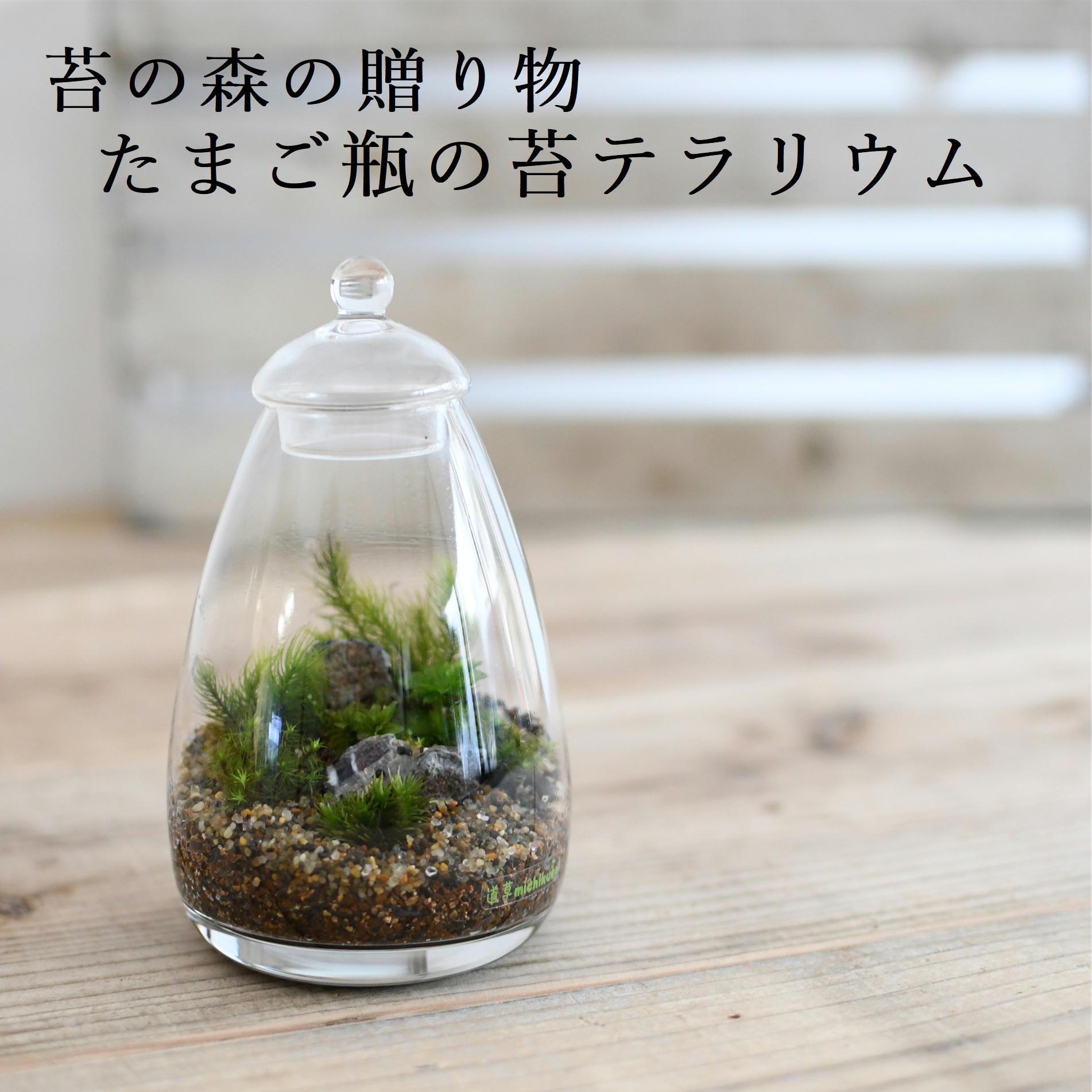 【苔の森の贈り物】苔テラリウム たまご瓶 ◆プレゼントにおすすめ