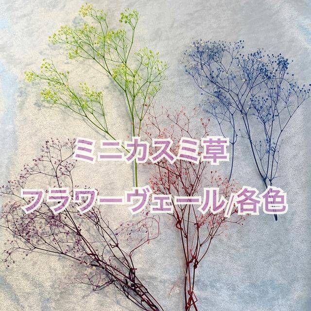 【花材・プリザーブドフラワー】ミニカスミ草・フラワーベール
