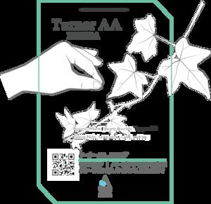 [100g] Turner AA, Kinini Washing station, Rwanda - Washed / ターナー AA キニニウォッシングステーション、ルワンダ - ウォッシュド