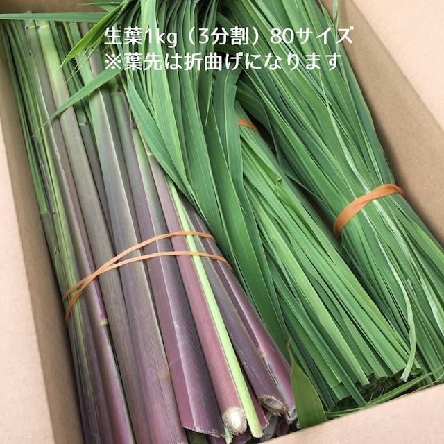 原種まこもの生葉 1kg (箱に入る長さにカット)
