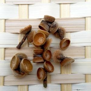 アカガシの殻斗 リース用