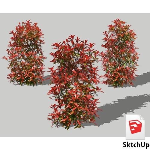 樹木SketchUp 4t_010 - 画像1