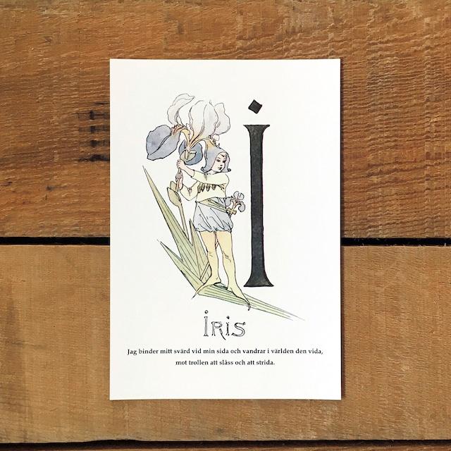 ポストカード「アヤメ@IRIS(王子たちの花文字 - 9)」
