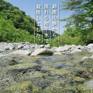 【87farm】業務用 食べられる ドライフラワー(ビオラ ヘブンリーブルー ) エディブルフラワー
