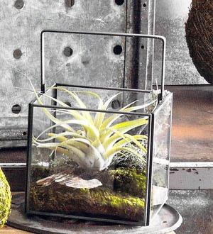 Roost Square Dry Terrariums 3個セット(S,M,L)
