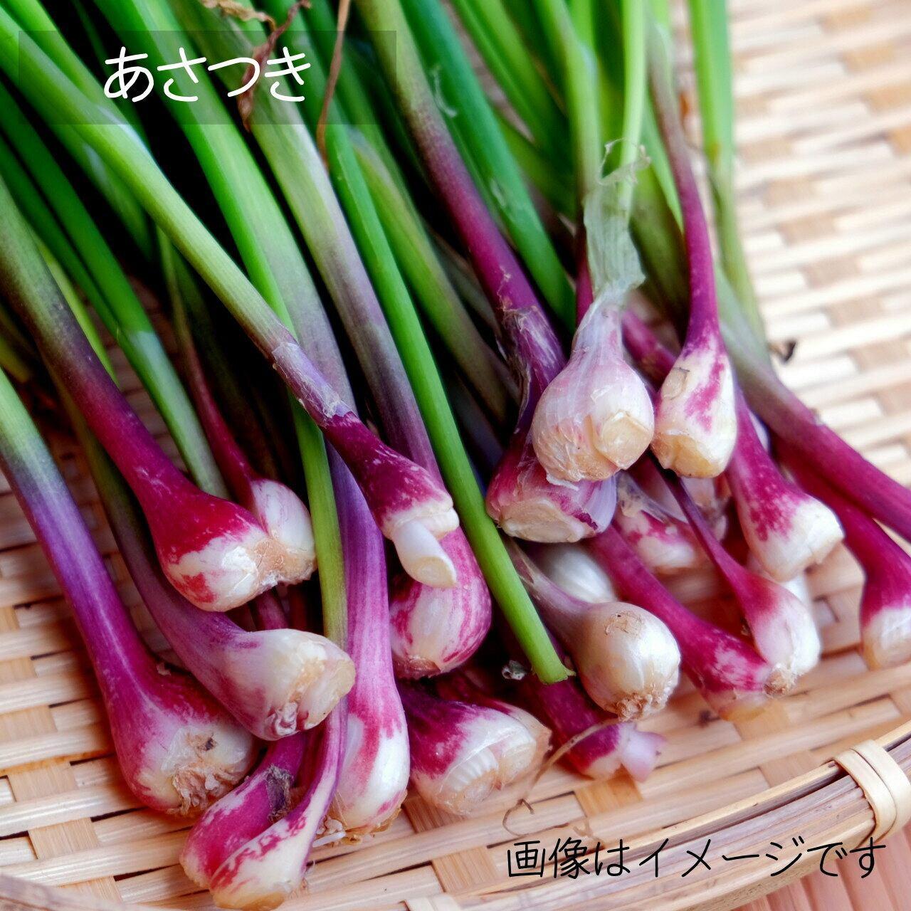 5月の朝採り直売野菜 あさつき 新鮮な春野菜 5月2日発送予定