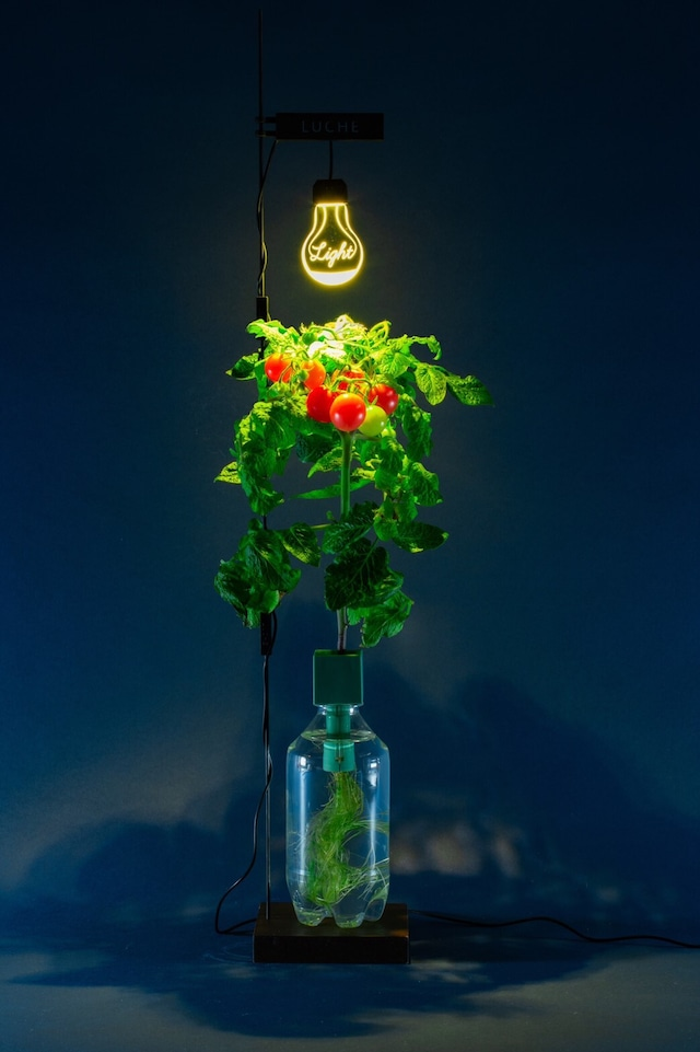 【Tomatoes - 栽培ライトセット】norm. original green grow kit & cultivation light set