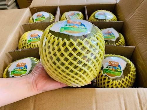 Dừa tươi 2 quả・Young Coconut 2 個