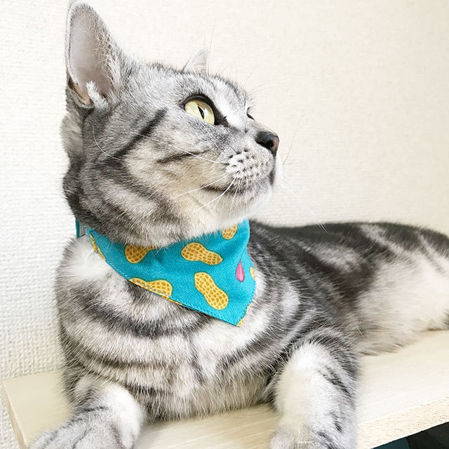 【ピーナッツ柄】猫用バンダナ風首輪/選べるアジャスター 猫首輪 安全首輪 子猫から成猫