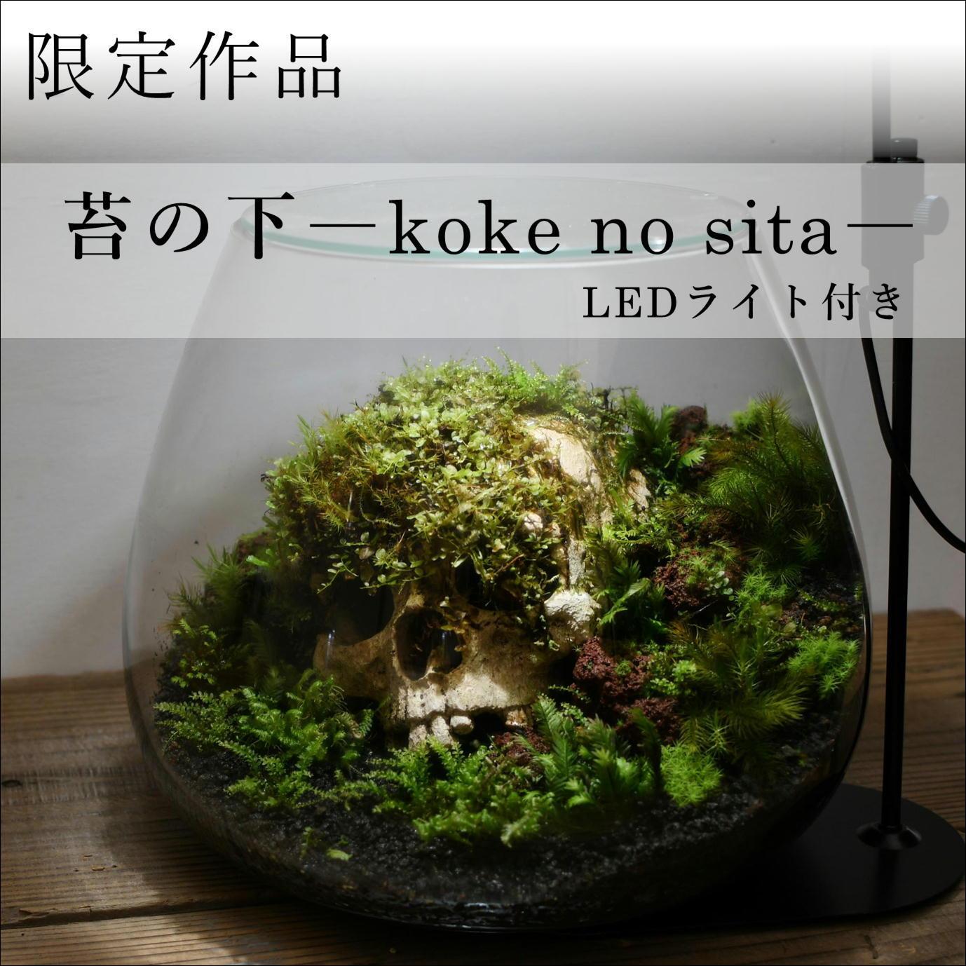 作品名− 苔の下 −【苔テラリウム・現物限定販売】