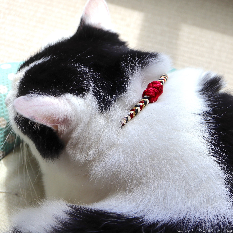 【猫首輪】Midnight ミッドナイト