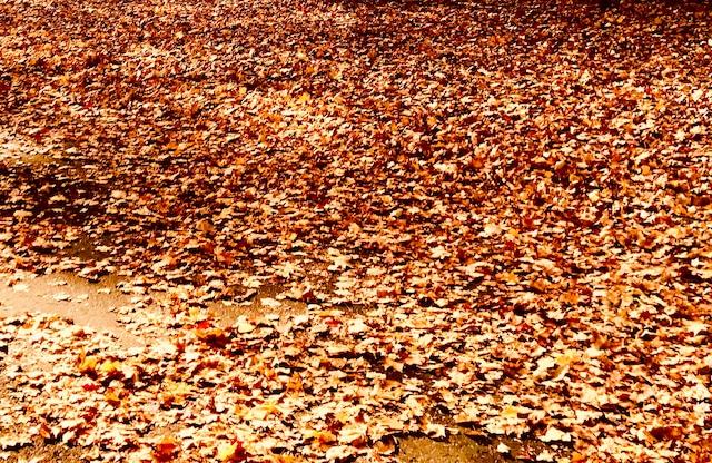 Photo Autumn carpet
