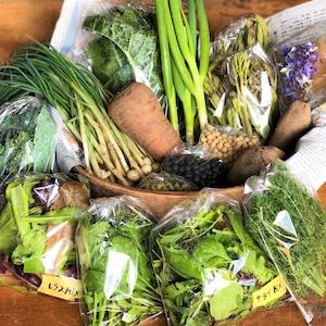 信州産 自然栽培『ファミリー定期便』月2回 100サイズ(農薬、肥料不使用)