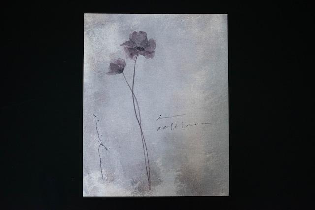 anemone02