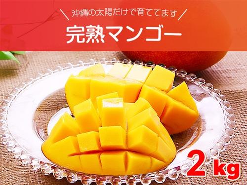 完熟マンゴー 約2キロセット (4~8玉入り) 沖縄県産 沖縄の太陽だけで育ててます