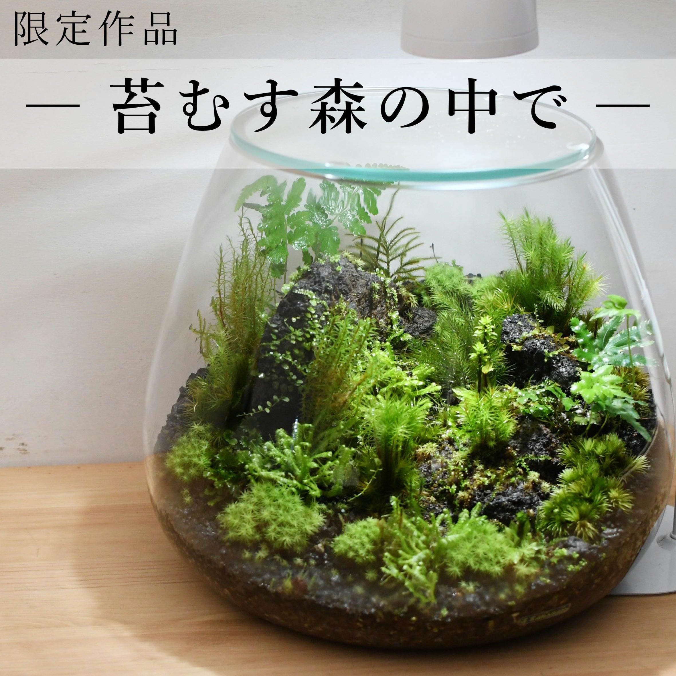 作品名− 苔むす森の中で −【苔テラリウム・現物限定販売】