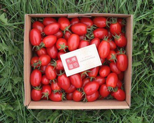 札幌蕃茄(アイコ)1kg