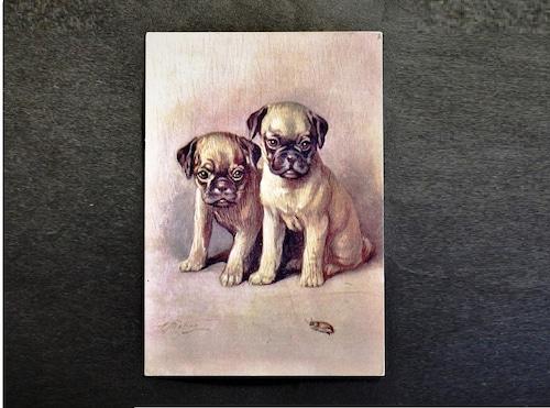 イギリス アンティークポストカード 犬の絵 絵葉書 The Pug パグ