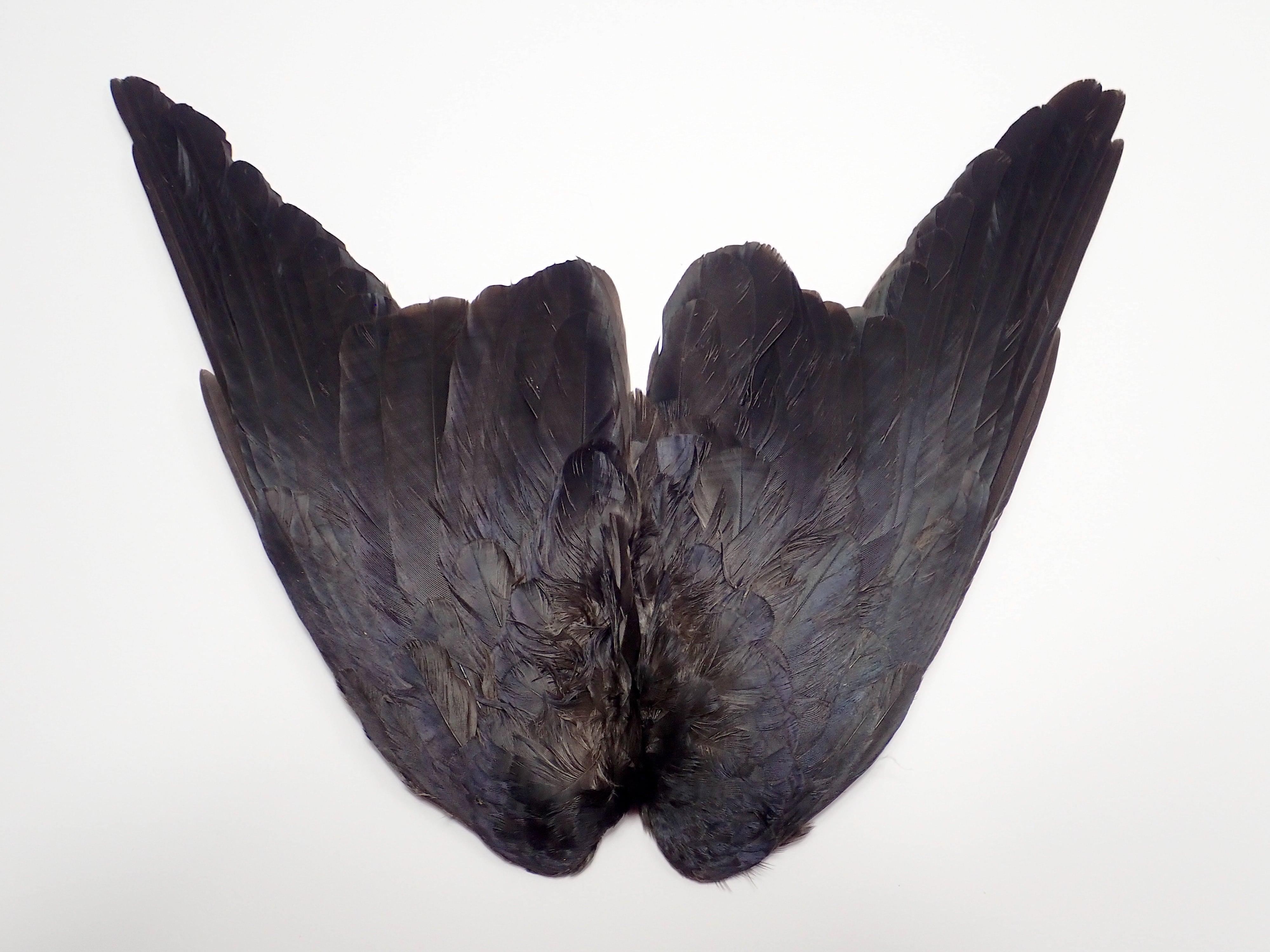 Jack Dow Wings Pair / ジャックドゥ ウイング 1ペア