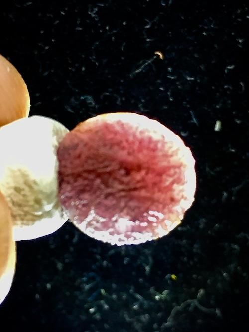 6) 「紫ゴビアゲート・卑弥呼・ビーズ」2021・人生応援価格