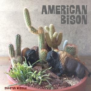 草を求めて 【 アメリカ バイソン 】
