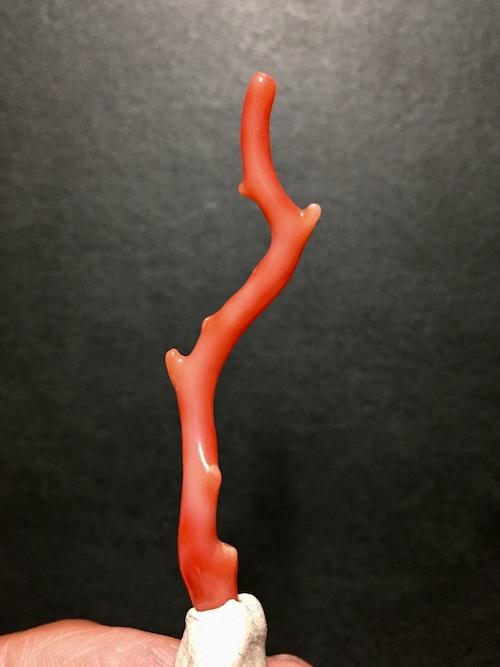 9) 赤サンゴ