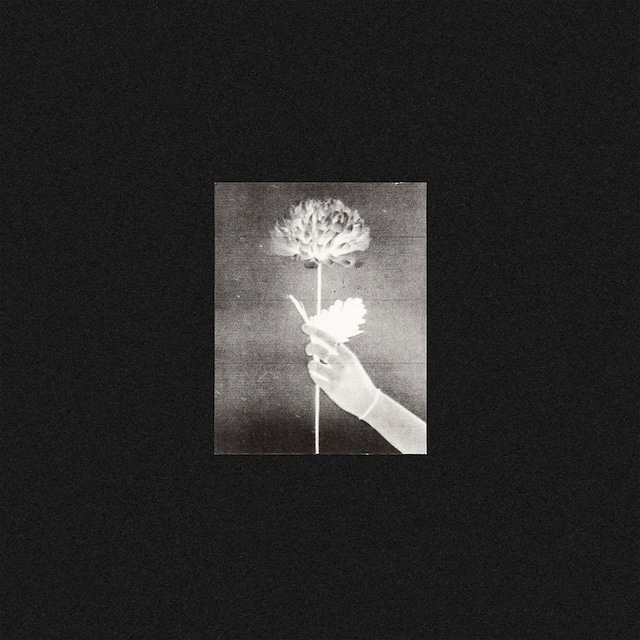 【CD】WHITE FLOWERS「DAY BY DAY」(TOUGH LOVE)