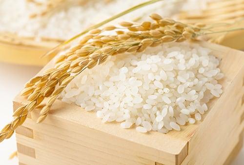 【新米】水口農家さんの五分付き米 5キロ