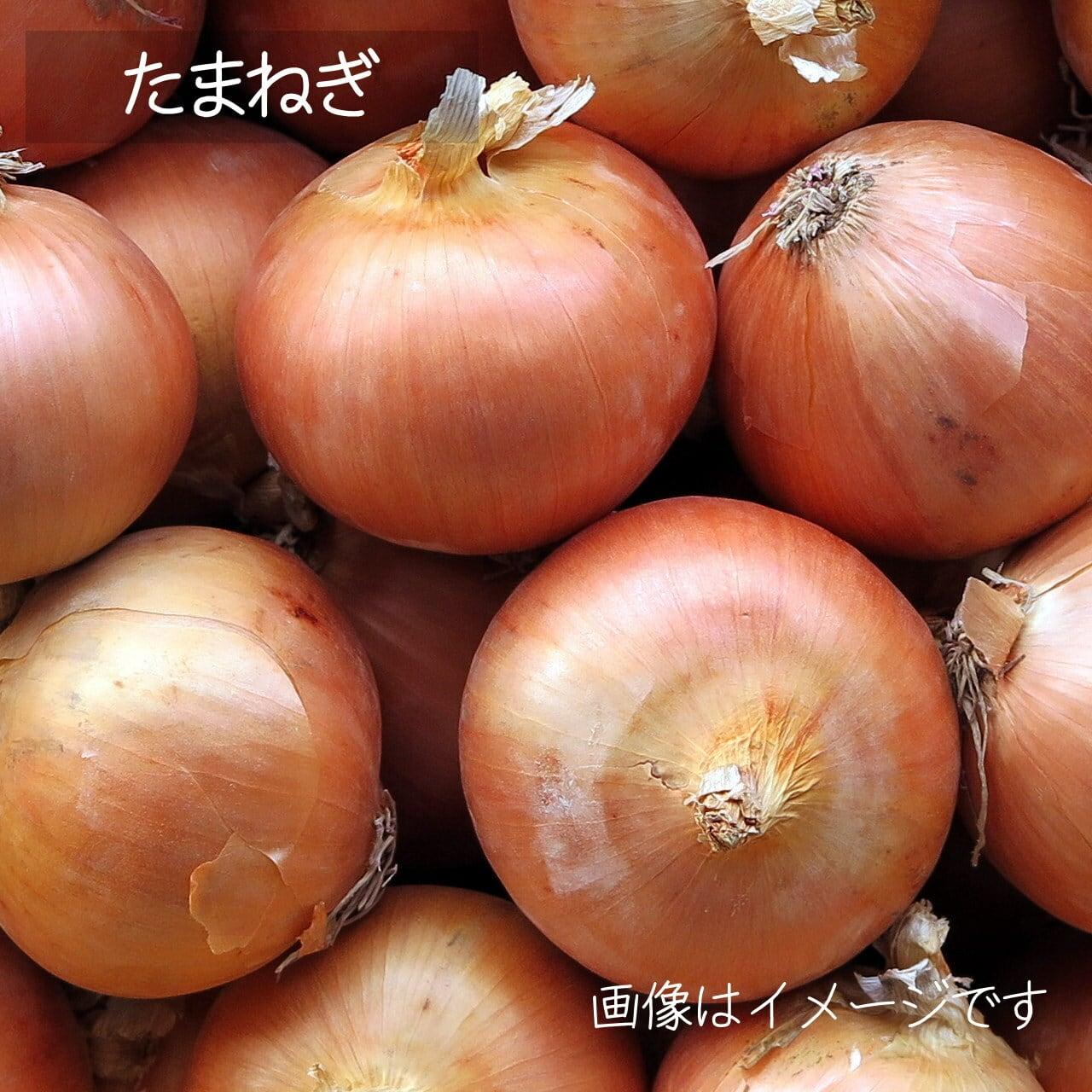 新鮮な秋野菜 : たまねぎ 約3~4個 11月の朝採り直売野菜 11月7日発送予定