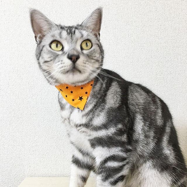 【ハロウィンスター柄】猫用バンダナ風首輪/選べるアジャスター 猫首輪 安全首輪 子猫から成猫