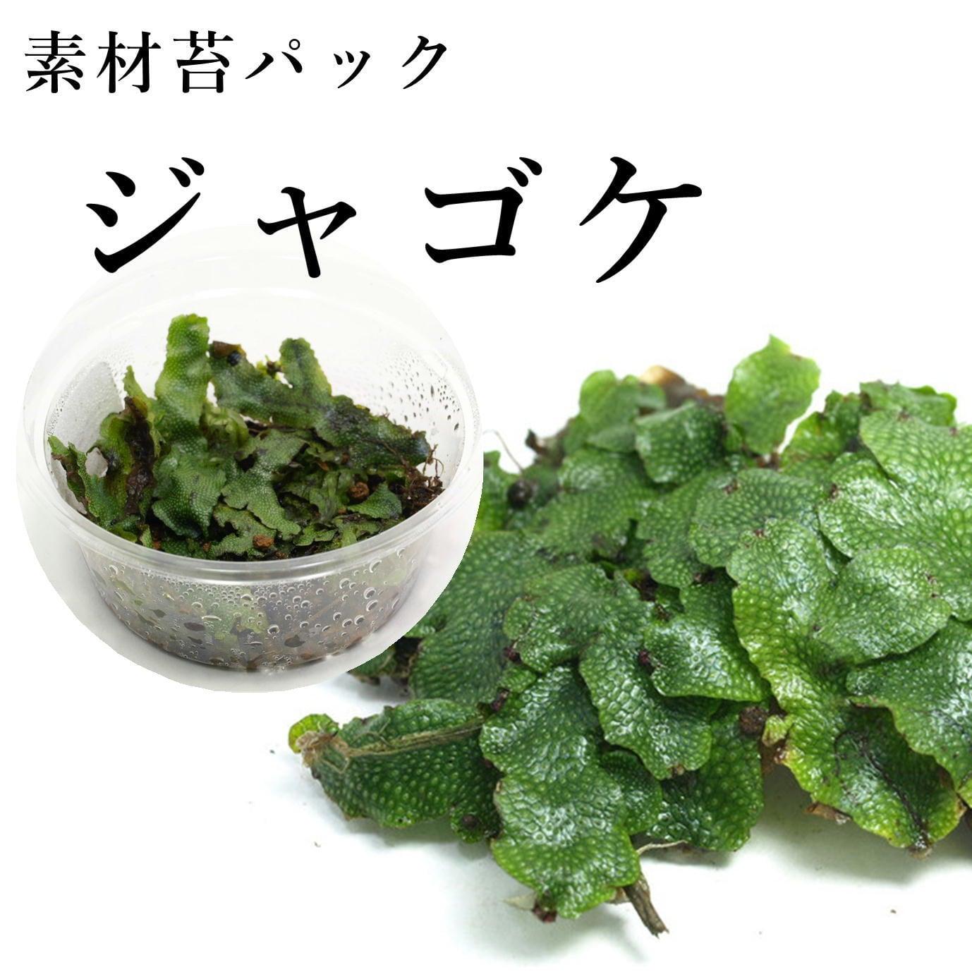 ジャゴケ 苔テラリウム作製用素材苔