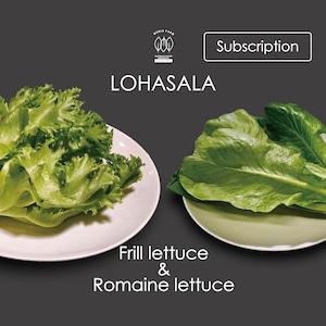 定期 LOHASALA フリル&ロメイン各3個 洗わずに食べられるLED野菜