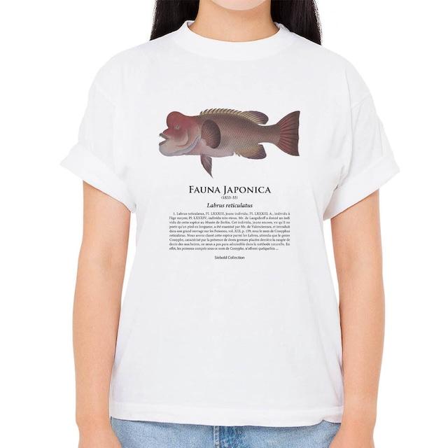 【カンダイ3】シーボルトコレクション魚譜Tシャツ(高解像・昇華プリント)