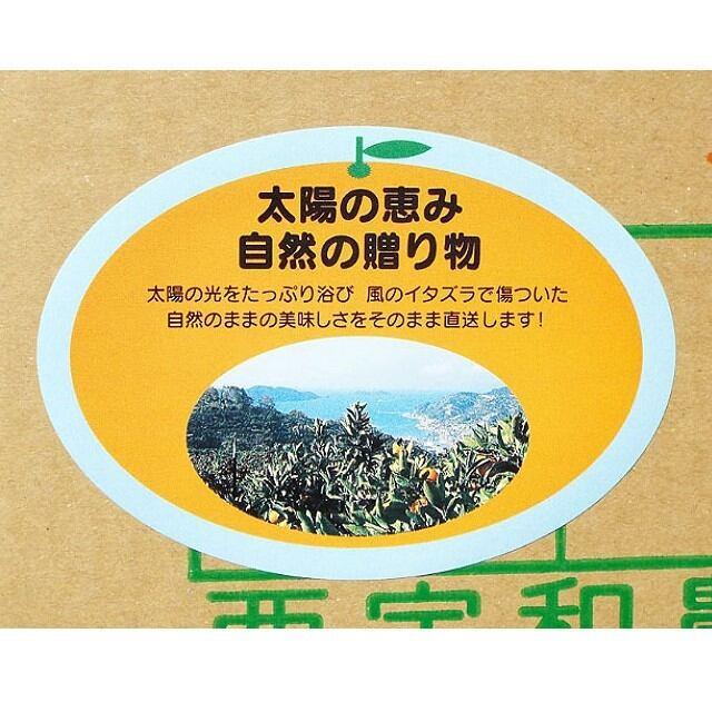 """""""お得"""" 「太陽の恵み(風スレ果)」(ご家庭用・レギュラー品) M/Lサイズ 10kg - 画像3"""