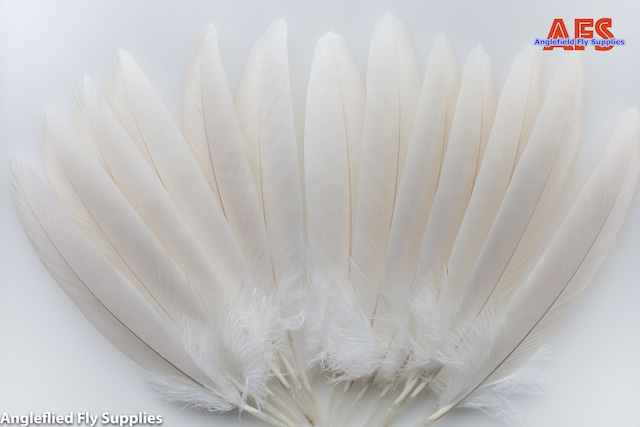 【 AFS 】Pelican White Shoulder Feather
