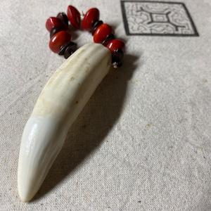 ワニの牙3 アマゾンの動物 シピボ族