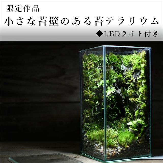小さな苔壁のある苔テラリウム◆LEDライト付き【苔テラリウム・現物限定販売】2021.10.22#5