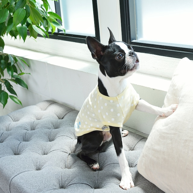 JE226 水玉Tシャツ (XXL)〜(DM)