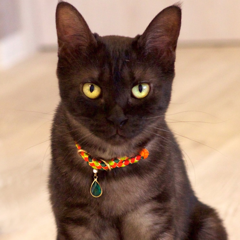 【猫首輪】Sungold サンゴールド 19年モデル