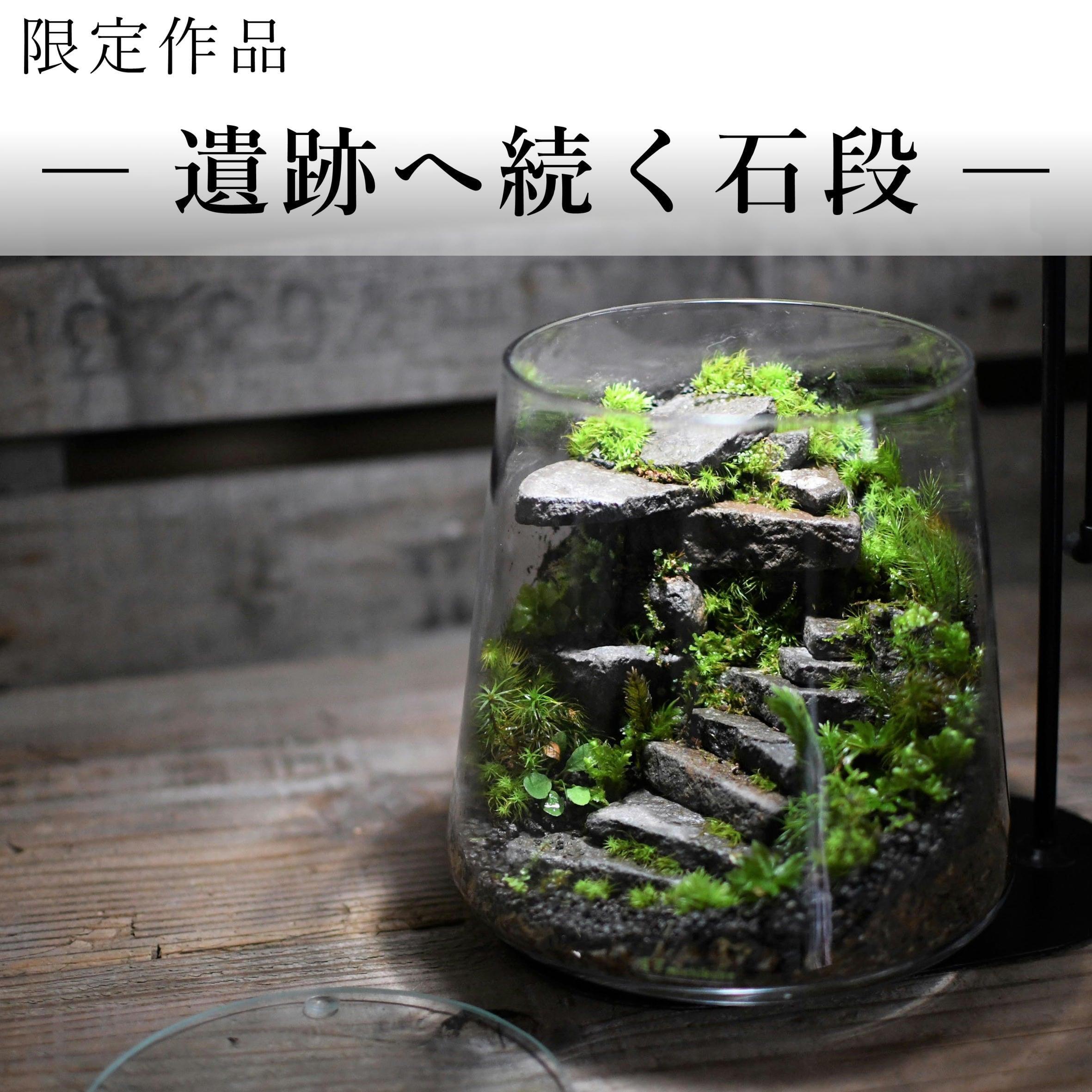苔景−遺跡へ続く石段 −【苔テラリウム・現物限定販売】