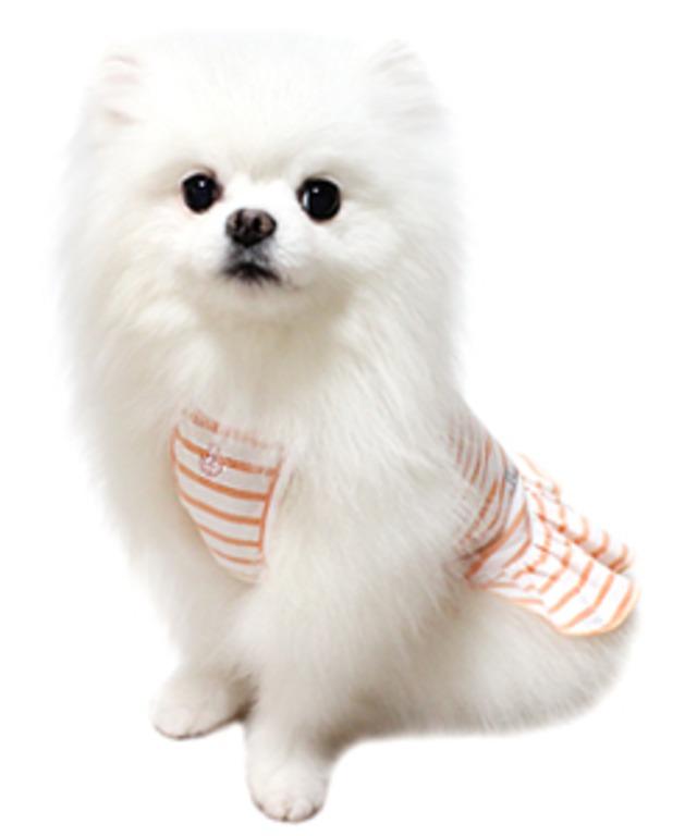 犬の生活 16SS ボーダーワンピ
