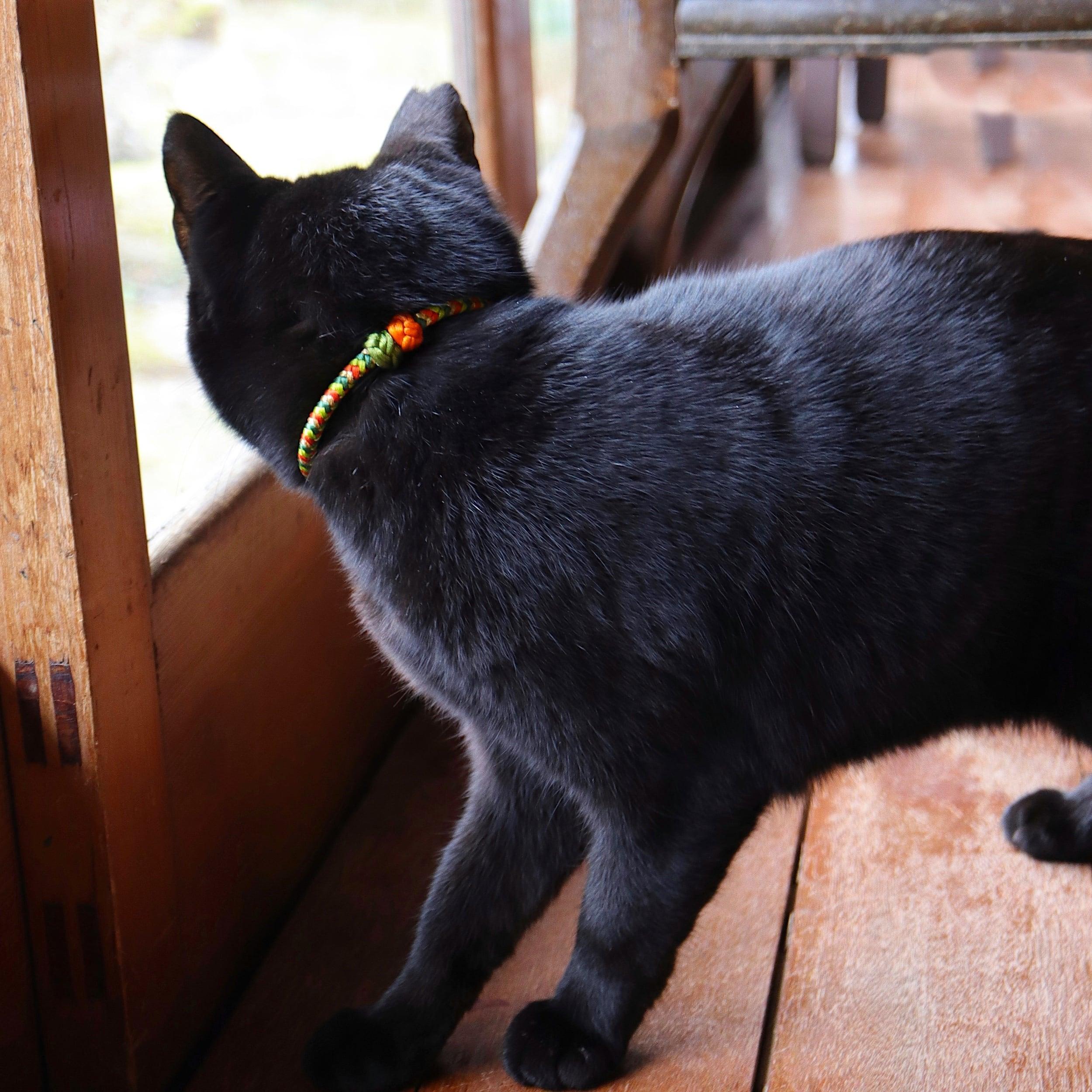 【猫首輪】Bell Pepper ベルペッパー