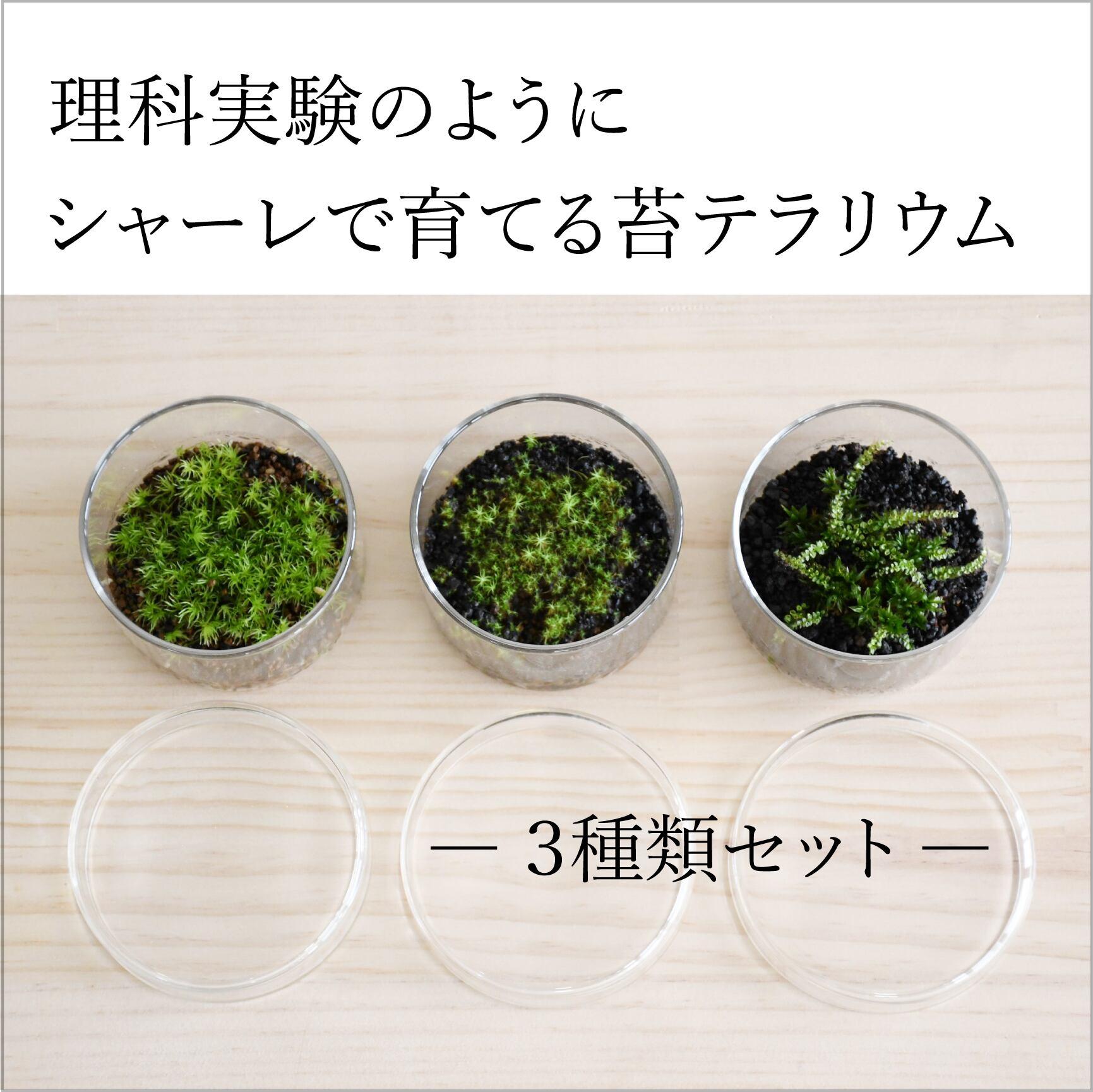 【実験のように楽しむ 苔テラリウム】 ミニシャーレ3種セット ◆コレクションする楽しみ
