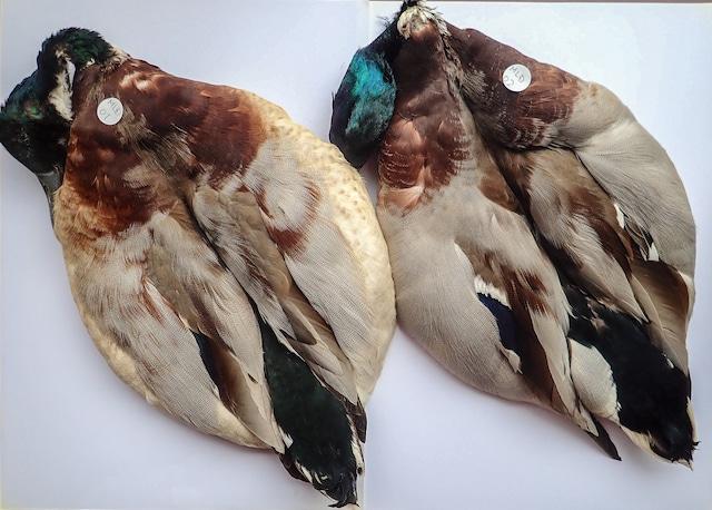 Mallard Duck Complete Skin / マラードダックCOPMスキン #MLD01