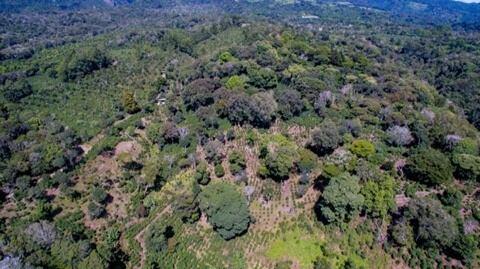 パナマ オルケタ農園・W ゲイシャ(100g)