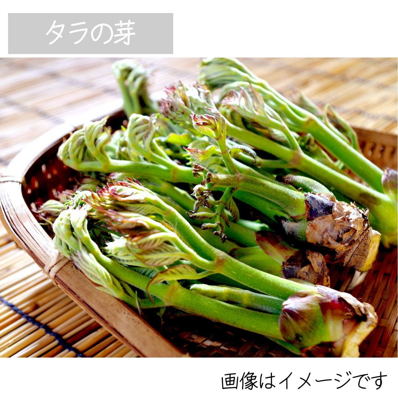 4月の山菜 タラの芽 約50g 朝採り直売野菜 5月上旬発送予定